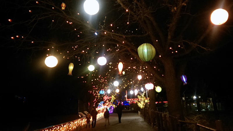 Zoo lights – a Denver holiday tradition