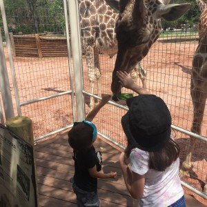 A young guest taking the opportunity to gently pet the giraffe.
